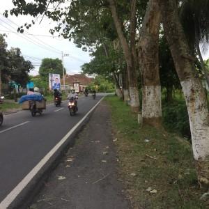 Foto: lokasi pohon yang membahayakan pengguna jalan.