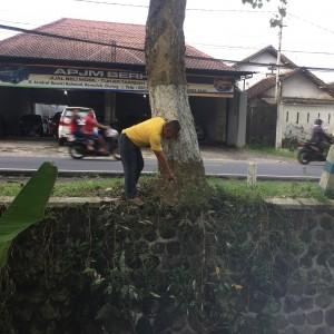 Foto: warga menunjuk akar pohon yang merusak bangunan plengsengan bahu jalan.