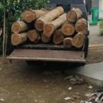 Foto: Barang bukti kayu jati