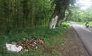 Bau Busuk Menyengat Saat Melintas di Jalan Hutan Curahjati