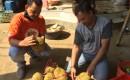 Misteri Durian Hitam, Hanya Satu Pohon Di Desa Songgon