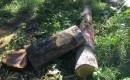 Ratusan Pohon Jati Di Rusak Sekelompok Orang, Di Wilayah Perhutani KPH Banyuwangi Selatan