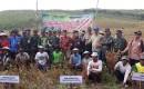 Dinas Kehutanan Bersama Perhutani Laksanakan Panen Raya Kedelai Dilahan KPH Banyuwangi Selatan