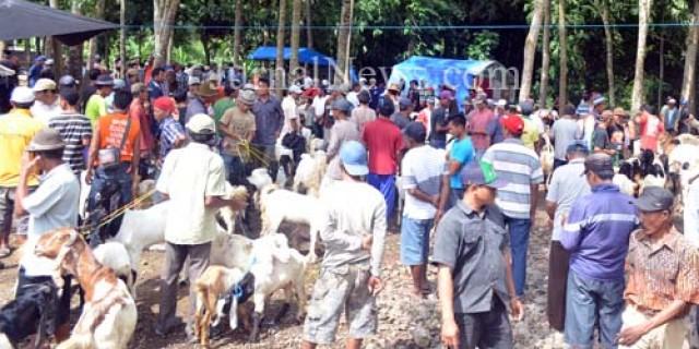 Pasar Hewan Menjadi Tulang Punggung Baru Desa Kradenan